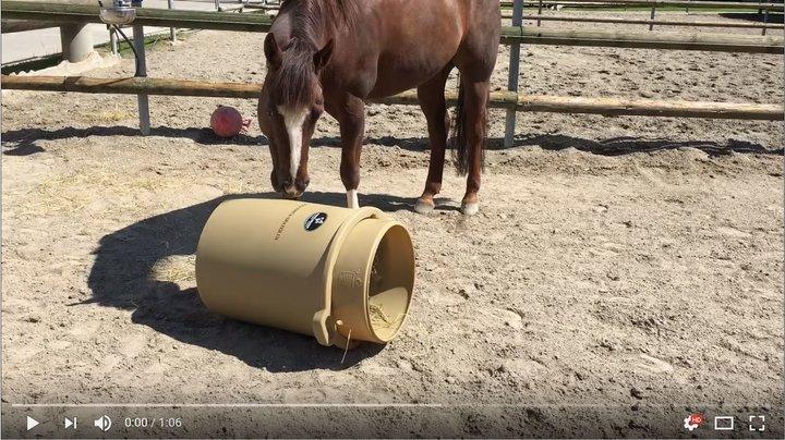 How your Horse takes the hay